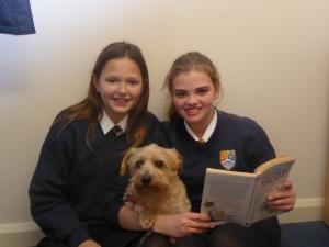 Ted - School Comfort Dog